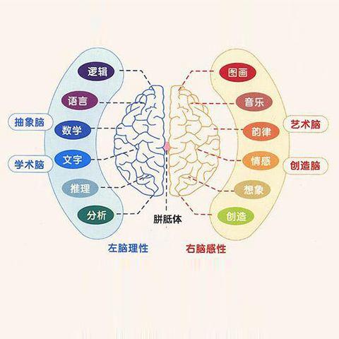 神奇大脑课程